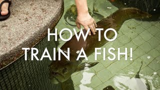 How to TRAIN YOUR FISH!