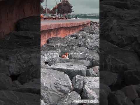 İstanbul sahilde köpek snap gündüz #SNAP #STORY indir