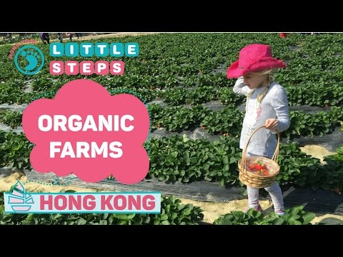 Visiting Organic Farms In Hong Kong