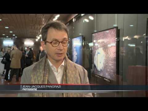 Exposition « Artic Feelings » à la Galerie des Pêcheurs de Monaco