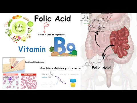 Folate ( Vitamin B9) And Folate Deficiency