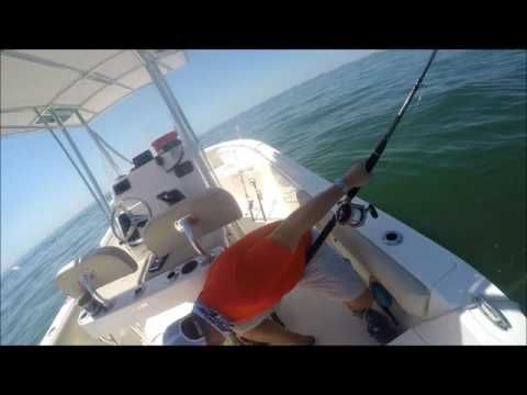 Scalloped Hammerhead and Atlantic Sharpnose shark tagging and fishing