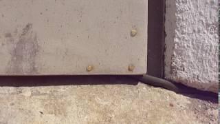 Dolní Ředice: dveře od kůlny (užovka obojková)