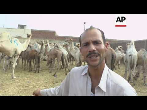 More Egyptians turn to camel meat this eid as a cheaper option