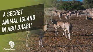 Abu Dhabi's secret animal island | Dear Alyne
