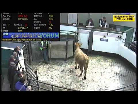Ballymahon Cattle Mart 25th Jan 2018
