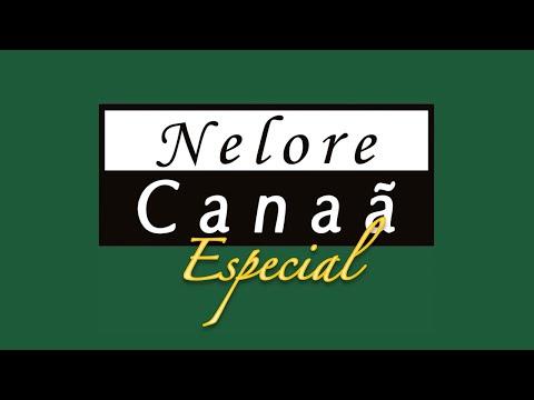 Lote 09   Hakuna FIV AL Canaã   NFHC 1268 Copy
