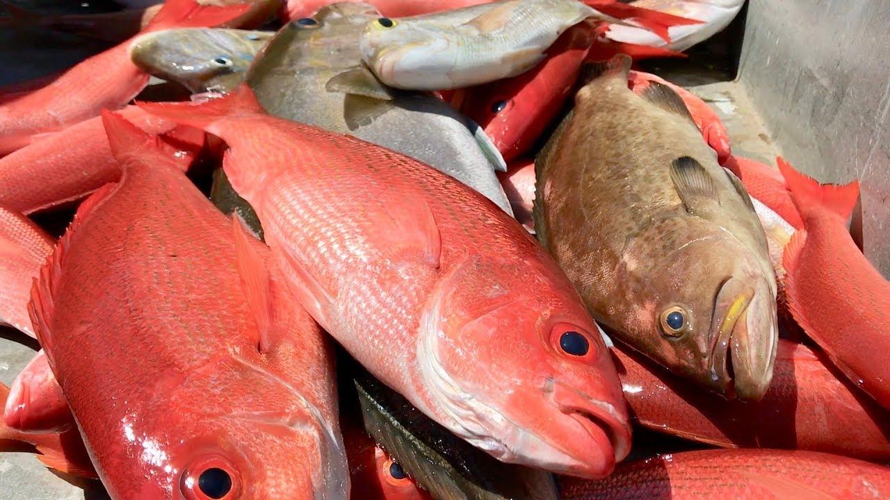 Best tasting fish in the ocean youtube for Best tasting fish