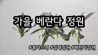 [홈가드닝] 가을 베란다 정원 - gardening