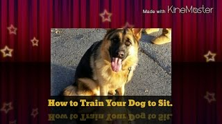 How To Train Your Dog To Sit The Easy Way. Part 1.