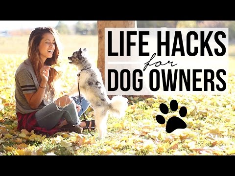 15 Life Hacks for Dog Owners! Pet Care Tips + Tricks | Ariel Hamilton
