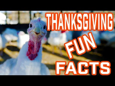 Cool & Interesting Facts About Thanksgiving Day