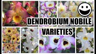 Dendrobium Nobile Varieties, Identification & Review