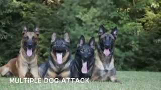 Multiple Dog Attack By Protection Dogs Plus