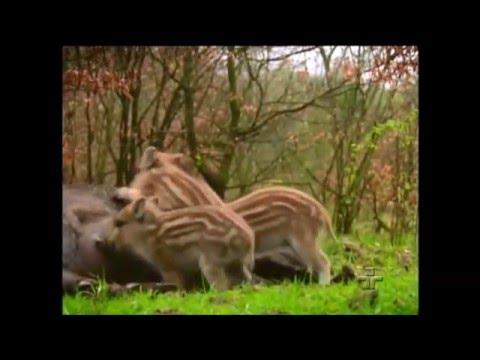 planeta terra vida animal