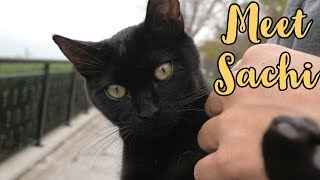 Cute Black Kitten Loves Us | Black Panther Kitten