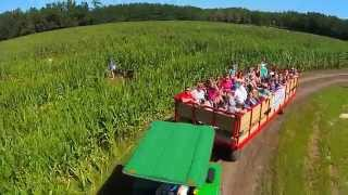 Fun At The West Farm Corn Maze
