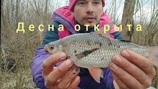 Фидерная рыбалка на десне ранней весной 2021