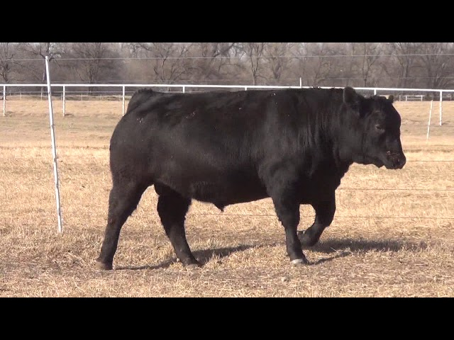 Express Ranches Lot 28