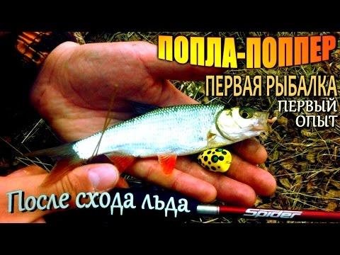 на что ловится красноперка в рыбалке для друзей