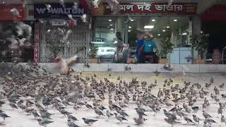 Somor Kumer Birds Feeding Part 2 total 1 week video