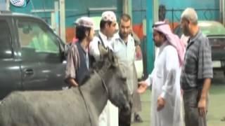 مقالب الكاميرا الخفية السعودية | الحمار محتاج تصليح