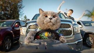 ПРИКОЛЫ 2019 КОТЫ Приколы с кошками 2019 Cмешные Кошки Funny Cats