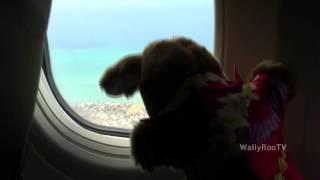 wallyroo goes to hawaii the plane ride to hawaii