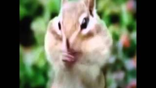 Beat boxing Squirrel #funnylipreadings...