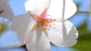 花は咲くプロジェクト。 1番のみ。