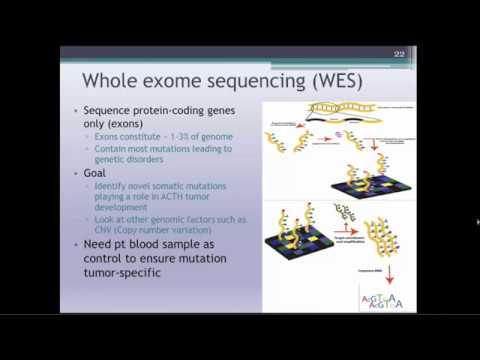 Pathogenesis of Corticotroph Tumor Development