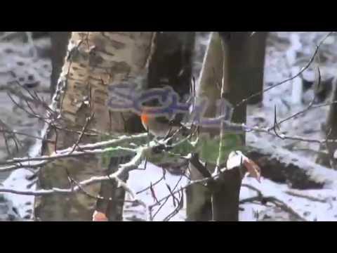 schulfilme-im-netz:-dvd-/-biologie:-jahresverlauf-im-wald