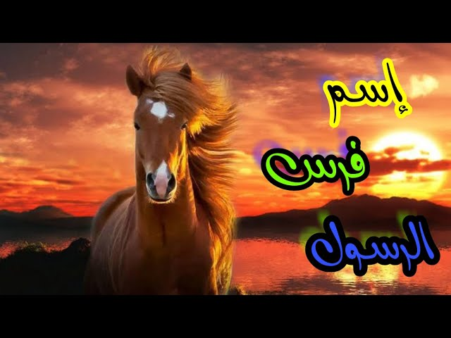 تعرف على اسماء خيول الرسول صل الله عليه وسلم Youtube