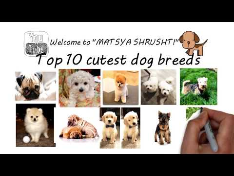 Top dogs breed