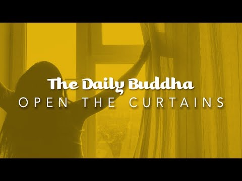 The Daily Buddha - Open The Curtains