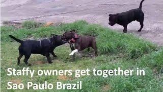 9o encontro amor staffbull cachorrodromo redondo sao paulo