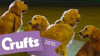 Southern Golden Retriever Display Team | Crufts 2015