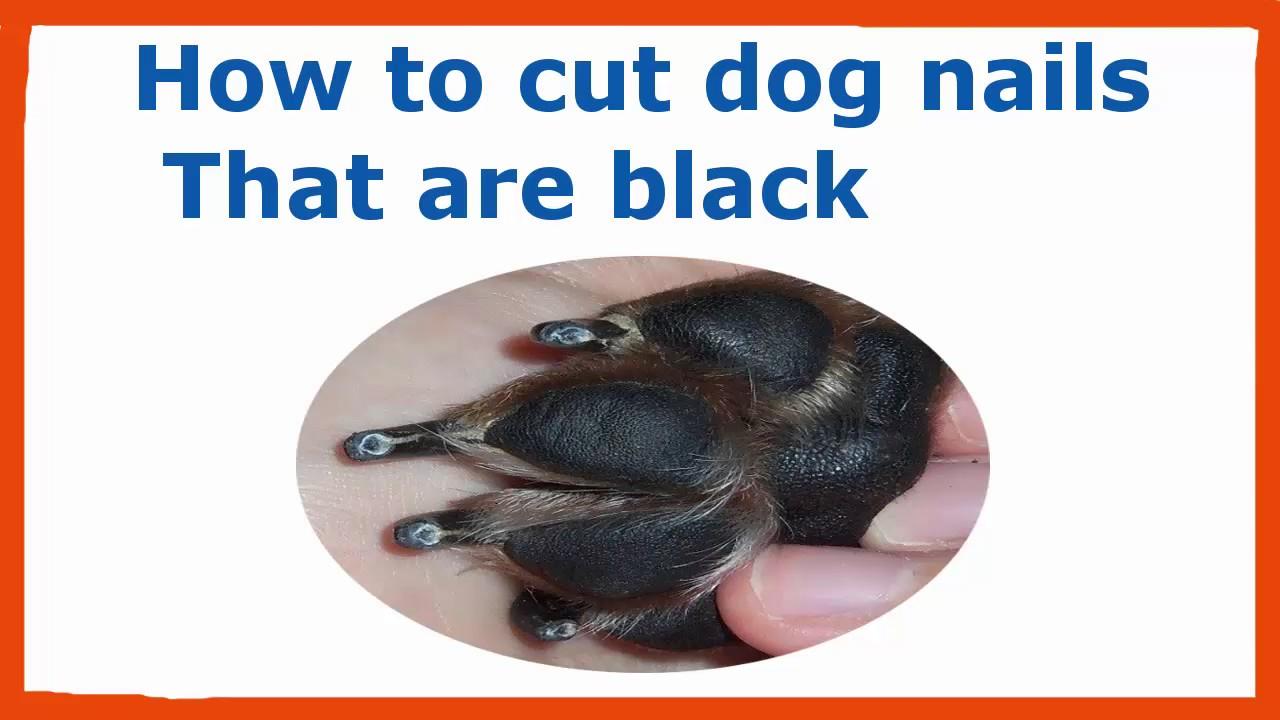 cut dog nails black