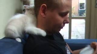 Белые котята атакуют