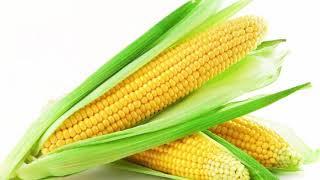 ভুট্টা ক্যান্সারসহ আরও অনেক রোগ প্রতিরোধে কাজ করে || Benefits of corn