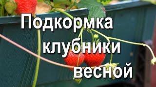 Подкормка клубники весной. Чем подкормить клубнику весной.(Как правило, для получения хорошего урожая той или иной культуры требуется позаботиться о внесении удобрен..., 2016-05-09T22:25:55.000Z)