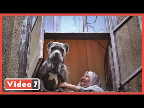 قصة حب بين حيوان شرس وامرأة عجوز .. مين فاكر الكلبة هيرا؟