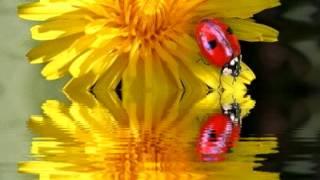 Одуванчик видео(Клип на песню