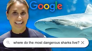 Shark Expert Answers The Most Googled Questions About Sharks
