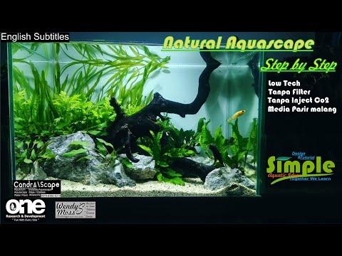 step-by-step-low-tech-aquascape-40-cm-tema-natural-tanpa-filter-tanpa-injeksi-co2