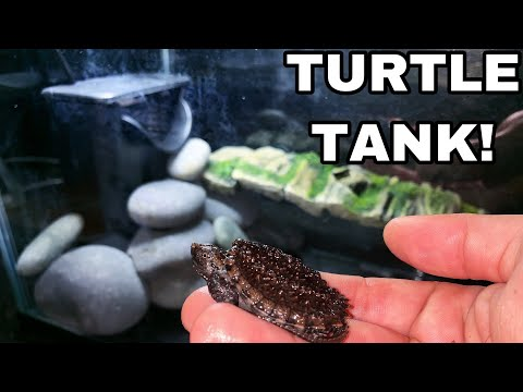 NEW Baby Snapping TURTLE TANK For GODZILLA!