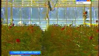 видео Аромат роз — какие розы как пахнут?