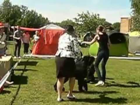 Int Dog Show Adaži 25.07.2015