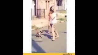 Собака работает по человеку))
