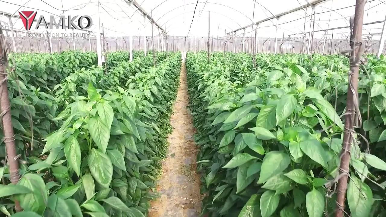 Greenhouse division yamko